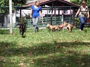 Praça dos Cães foi inaugurada em Santos, SP (Foto: Isabela Carrari/ Prefeitura de Santos)