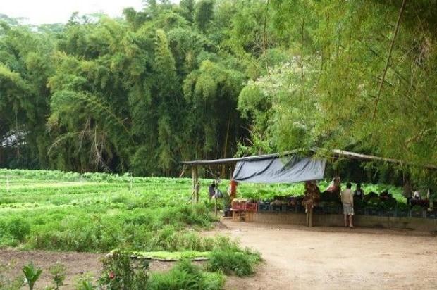No canto da horta, h uma estrutura especial para vender os produtos frescos plantados ali  (Foto: Reproduo/GNT)