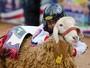 Pequenos peões montam em carneiros (Erico Andrade/G1)