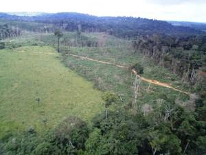 """Operação """"Onda Verde"""" já identificou 2,5 mil hectares de floresta desmatados de forma irregular (Foto: Nelson Feitosa/Ibama)"""