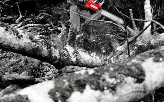 Desmatamento (Foto: Eduardo Santos Flickr)