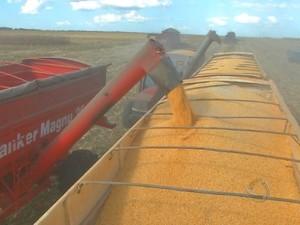 Carregamento de milho em caminhão em Mato Grosso (Foto: Reprodução/TVCA)