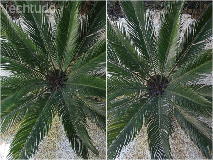 Comparação entre uma DSLR e a NX2000. À esquerda, foto feita com uma Canon T2i e à direita com a Smart Camera da Samsung  (Foto: TechTudo/Luciana Maline)