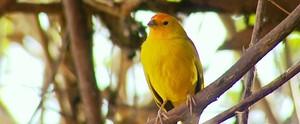 Terra da Gente conta história da professora que virou observadora de pássaros (Reprodução / EPTV)