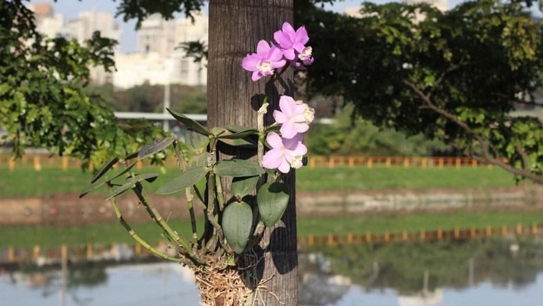 orquidea-projeto-marginal (Foto: Divulgação)