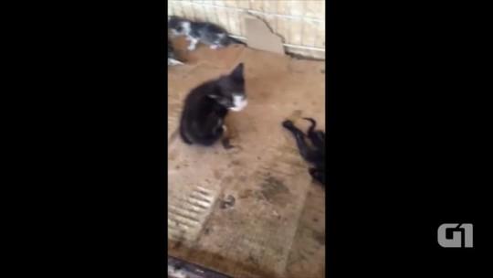 Estudante denuncia maus-tratos em CCZ: 'tinha gato morto com os demais'