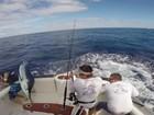 Marlim salta em barco e atinge pescador na Austrália