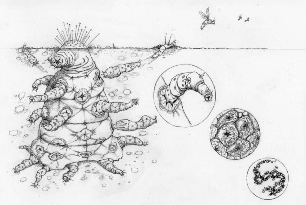 Um extraterrestre com diversas partes do corpo funcionando (Foto: Universidade de Oxford)