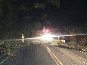 Fogo em bambuzal causa interdição parcial de rodovia em Piau (Foto: Bombeiros/Divulgação)