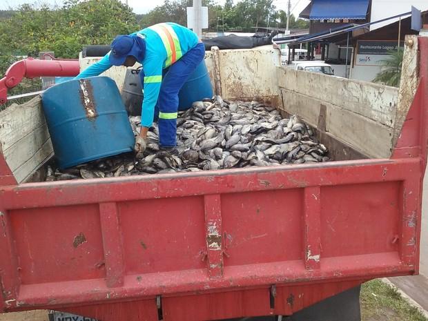 Peixes mortos encheram caçamba de caminhão (Foto: Divulgação/ Ibraff)
