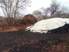 Em MG, PM aplica R$ 412 mil em multa em áreas de desmatamento