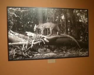Exposição pode ser conferida no Parque Nacional do Itatiaia  (Foto: Reprodução/ RJTV 1ª Edição)