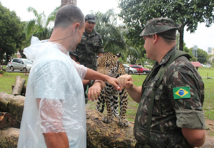 Repórter enfrenta medo e recebe carinho de Jiquitaia (Foto: Katiúscia Monteiro/ Rede Amazônica)