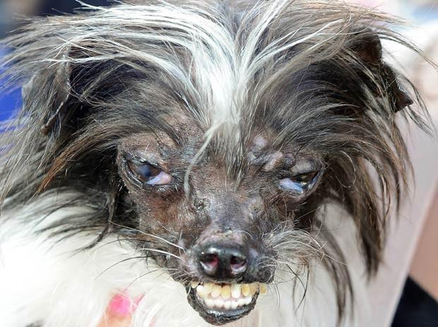 O cão Peanut (Foto: Josh Edelson/AFP)