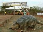 Turista encontra aventura e sossego no Parque Nacional da Emas, Goiás