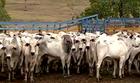 Vacinação, cultivo de coco e turismo; veja!  (Reprodução / TV Gazeta)