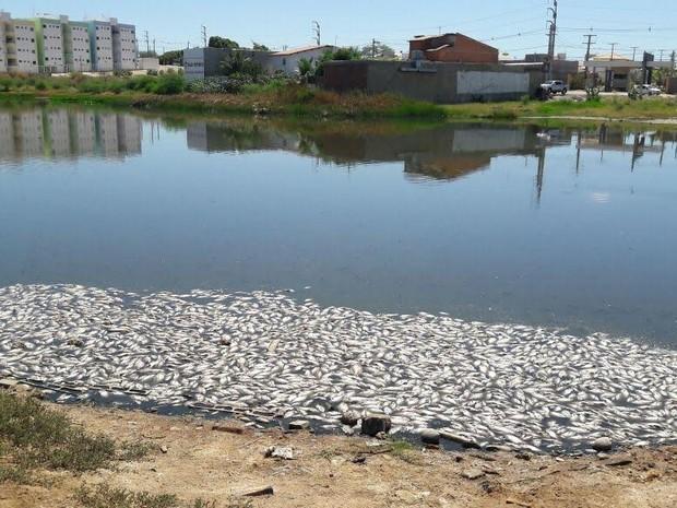 Falta de oxigenação pode ter ocasionado morte dos peixes (Foto: Aracelly Romão / TV Grande Rio)