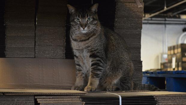 O gato Venkman (Foto: Empirical Brewery/Reprodução)