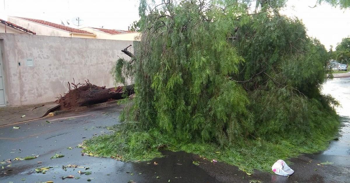 Forte chuva derruba ao menos quatro árvores em bairros da cidade ... - Globo.com