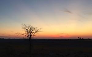 Pedro Pelo Mundo: veja fotos da viagem para Botsuana