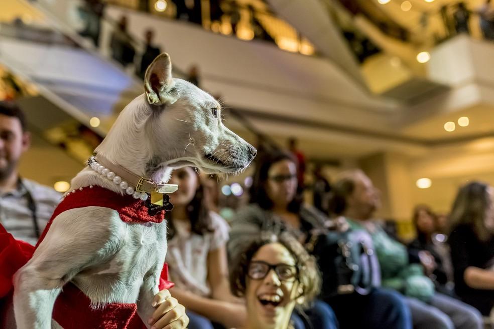 Cachorros também acompanharam o desfile da plateia (Foto: Bruno Gonzales/Divulgação)