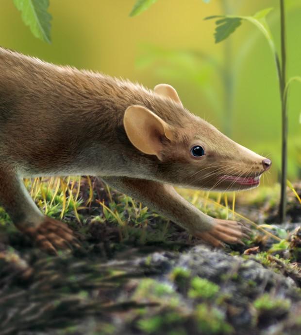 Ilustração mostra como seria mamífero Spinolestes xenarthrosus, descoberto a partir de fóssil encontrado na Espanha  (Foto: Oscar Sanisidro/Divulgação)