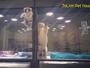 Gatinho 'foge' de compartimento de pet shop para brincar com amigo cão