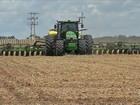 Atraso da colheita da soja reduz o plantio do milho safrinha no MT