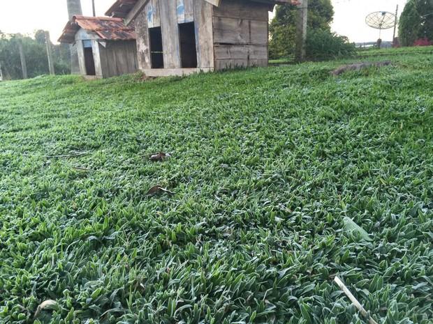 Campos em Campo Alegre, SC, também ficaram congelados nesta quinta (28). (Foto: Kleber Pizzamiglio/RBS TV)