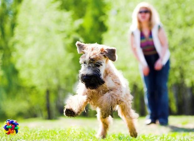 Brincar com uma bolinha é um prato cheio para deixar o seu cachorro feliz - e deixa ele entretido para não comer a porta do armário (Foto: Shutterstock)