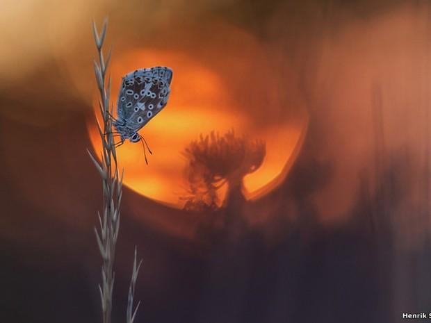 """Fotografia com lente macro de uma borboleta no pôr do sol, feita por Henrik Spranz, de Viena, na Áustria, venceu na categoria """"Small World"""". (Foto: Henrik Spranz)"""
