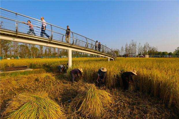 Construção em Sítio Arqueológico chinês tem a paisagem mais bonita do mundo (Foto: Divulgação)