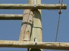 Maritacas fazem ninho em alto de poste em Minas Gerais
