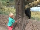 Vídeo fofo mostra menino e gorila bebê brincando de 'esconde-esconde'