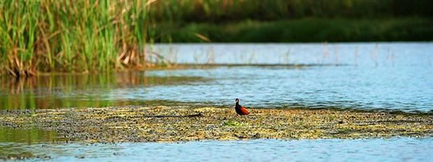 Morar, episdio 2, Pantanal (Foto: Divulgao/GNT)