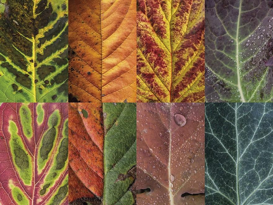 folhas outono 5 (Foto: Carola Becker)