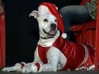 Evento elege o 'Cão Noel' e arrecada ração para animais de rua em Bauru