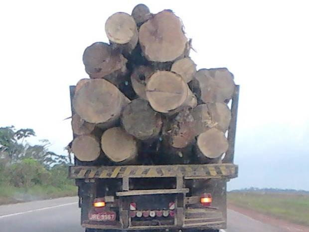 Carga foi apreendida na BR-010 (Foto: Divulgação / Polícia Rodoviária Federal)