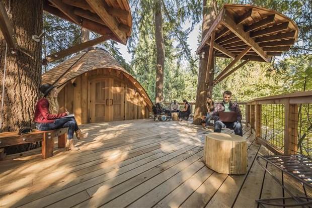microsoft-casa-na-árvore- (Foto: Divulgação)
