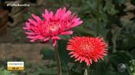 Flores que crescem com pouca água marcam a chegada da primavera no norte; veja na previsão
