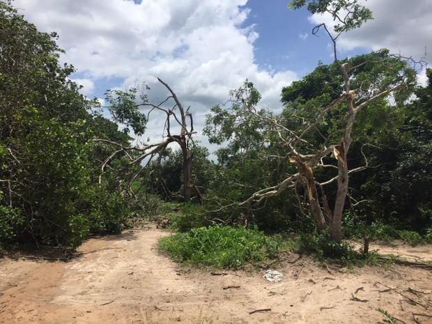 Árvores derrubadas após fortes ventos em Camocim, no Ceará (Foto: Divulgação/Defesa Civil de Camocim)