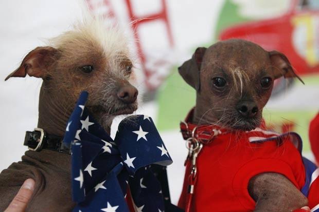'Icky' (esq) e 'Mugly', concorrentes ao título de cão mais feio do mundo. (Foto: Stephen Lam/Reuters)