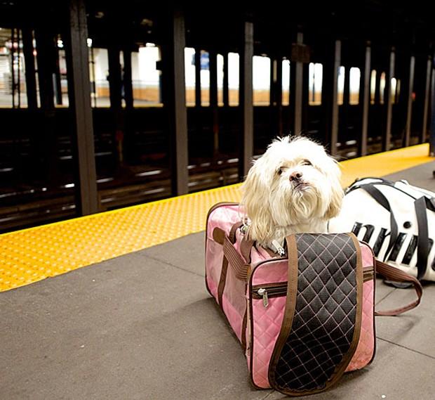 O americano Elias Weiss Friedman teve uma ideia em 2013 durante suas férias na Europa. Ele fotografou um cão da raça boxer em Viena e se perguntou a razão de não existir um blog voltado para cães ao estilo do The Sartorialist, um dos mais famosos blogs de (Foto: The Dogist, LLC)