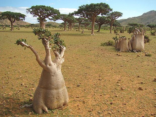 Socotra, arquipélago de ilhas no Oceano Índico, pertencentes ao Iêmen (Foto: Nacho Benvenuty/Creative Commons)
