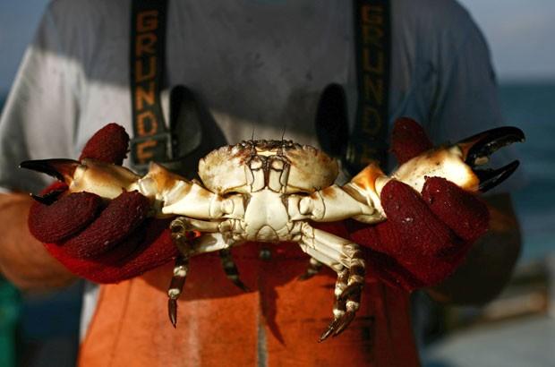 Segundo estudo, caranguejos podem sentir dor quando mergulhados em água fervente (Foto: Arquivo//Carlos Barria/Reuters)