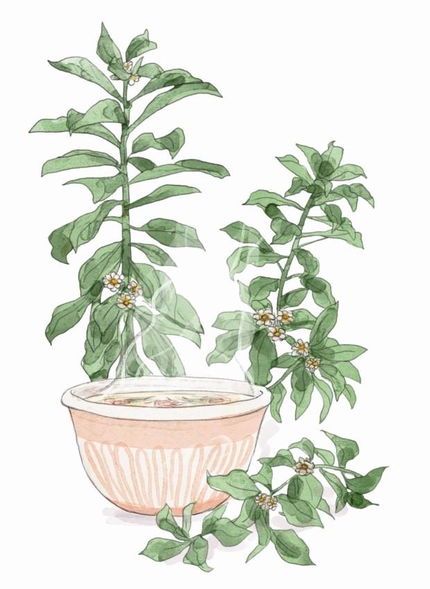 Ilustração de caldo verde (Foto: Ilustração Mary Cagnin / Editora Globo)