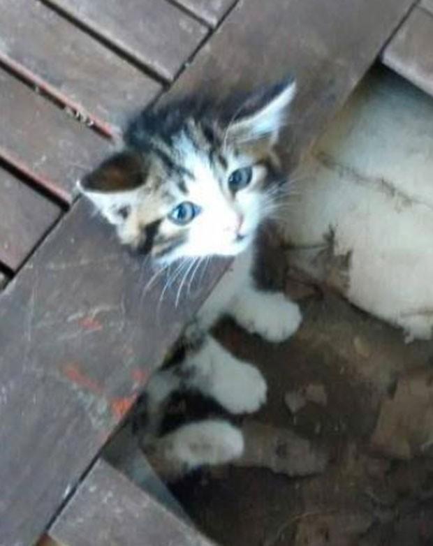 Gatinho foi encontrado com a cabeça entalada em mesa (Foto: Reprodução/Facebook/Celia Hammond Animal Trust)