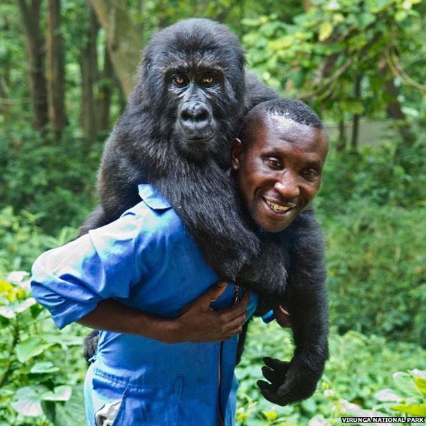 Andre Bauma e um de seus 'filhos': guarda florestal cuida de quatro órfãos  (Foto: Virunga National Park)