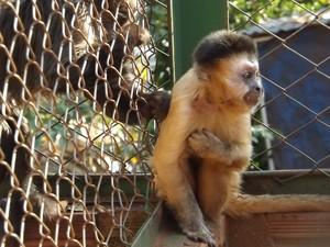 Animal está se acostumando com o novo lar e já vive com outros da mesma espécie (Foto: Alan Schneider/G1)
