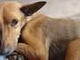 Maltratar animais é crime e essa prática deve ser denunciada